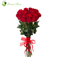 Wrap of 12 Red  Rose