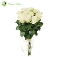 Wrap of 12 White Rose
