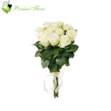 Wrap of 12 White Rose